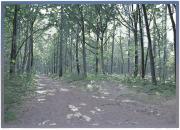 Houtsnede/Woodcut 2013-III